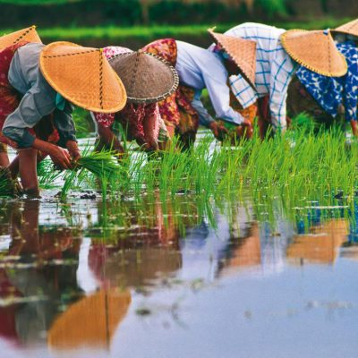 Rice-Paddies-Vietnam-192533-0